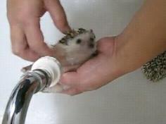 ハリネズミを洗う2