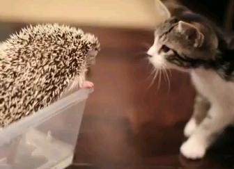 ハリネズミと子猫の出会い